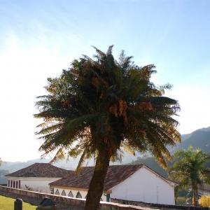 "Sun shining around a palm tree in Ouro Preto (""Black Gold"") in Minais Gerais state, Brazil"
