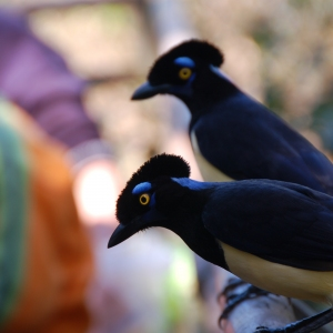 A pair of friendly birds on the Argentinian side of the Iguazu Falls.
