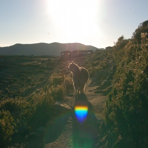 This llama followed us for a couple of miles while we walked on Isla del Sol, Lake Titicaca. It felt vaguely threatening (llamas are used to defend sheep from wolves), so we stayed well away... Eek!
